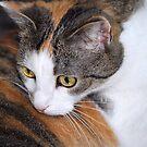Nellie - Catlick by vbk70
