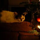 Christmas Cat by vbk70