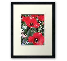 Tulip Time in Australia 16 Photograph by Heather Holland  Framed Print