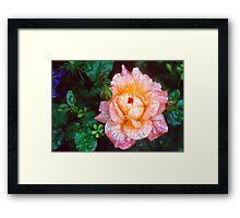 Rose Is My Love Framed Print
