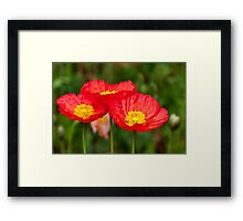 Trio of red poppies Framed Print