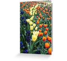 Colourful tulips and hyacinths Greeting Card