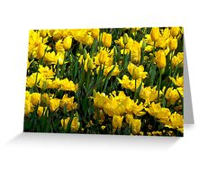 Beautiful yellow tulips Greeting Card
