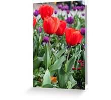 Red and purple tulips Greeting Card