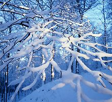 Snow covered branches by intensivelight
