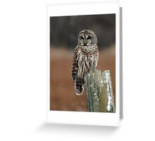 Barred Owl  2 - Ontario Canada Greeting Card