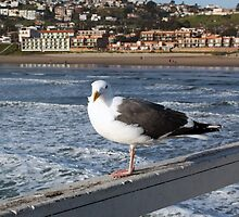 Seagull at Pismo Beach by Renee D. Miranda
