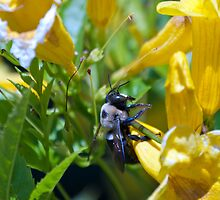 Busy as a bee. by RBuey