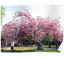 Pink Blossom Tree Poster