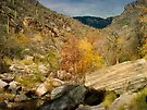 Finally... Fall ~ Sabino Canyon by Lucinda Walter
