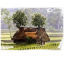 Barn in the Rice Paddy Poster
