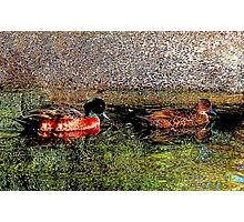 Two Ducks Photographic Print