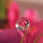 flower in waterdrop by Mustafa UZEL