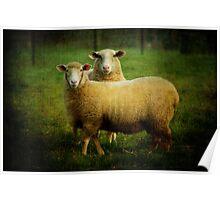 sheepish love Poster