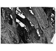 Tree Trunk B&W Poster