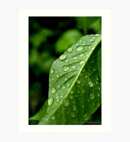 Droplets of Rainfall Art Print