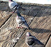 3 pigeons by Renee D. Miranda