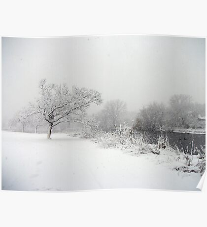 Natures Black and White at Northwood Poster