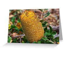 Banksia media  Greeting Card