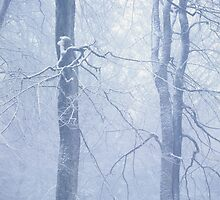 Two trees in a foggy winter forest by intensivelight
