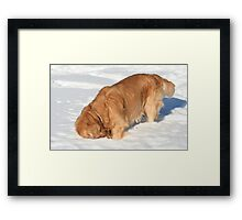 I Know Your Down There! Framed Print