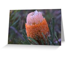Banksia hookeriana  Greeting Card