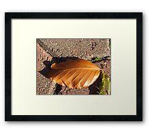 Fallen Russet Leaf Framed Print
