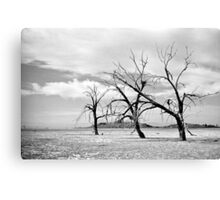 Last Standing Canvas Print