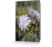 chicory flower Greeting Card