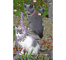 Cool Flower Cats In The Garden Photographic Print