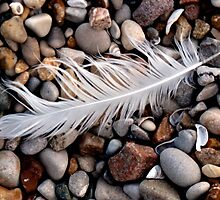 feather on beach by Leeanne Middleton