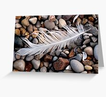 feather on beach Greeting Card