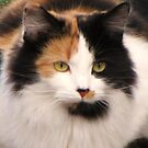 Callie Calico by lorilee