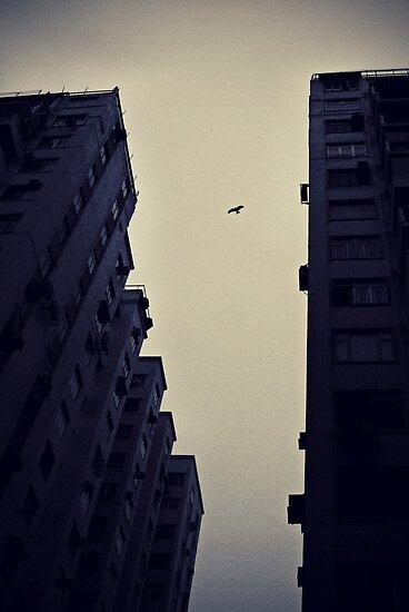 Looming above us - Bird in flight Hong Kong by deolandicho