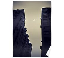 Looming above us - Bird in flight Hong Kong Poster