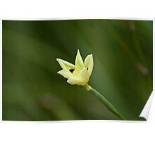 Flower finger in green blur Poster
