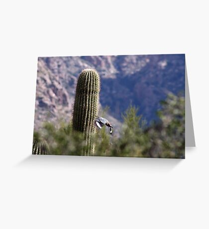 Gila Woodpecker Greeting Card
