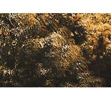 Winter Wattle Photographic Print