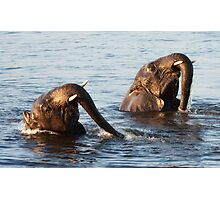 Synchronised Swimmers Photographic Print