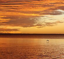 Sunset seagull, Coral Bay, WA by Becncall Bec Lloyd