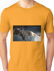gray cat Unisex T-Shirt