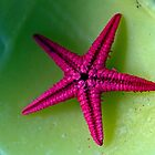 Lonely starfish by Andrew (ark photograhy art)