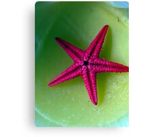 Lonely starfish Canvas Print