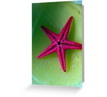 Lonely starfish Greeting Card