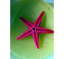 Lonely starfish Photographic Print