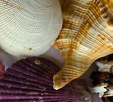 Shell compilation by Andrew (ark photograhy art)