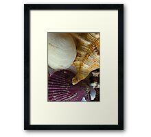 Shell compilation Framed Print