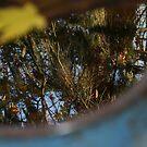 Reflection in a Wheelbarrow by Lorrie Davis