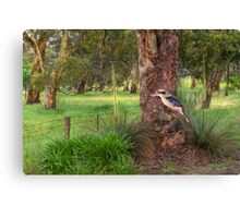 The Blue-winged Kookaburra Canvas Print