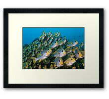 The Audience Framed Print
